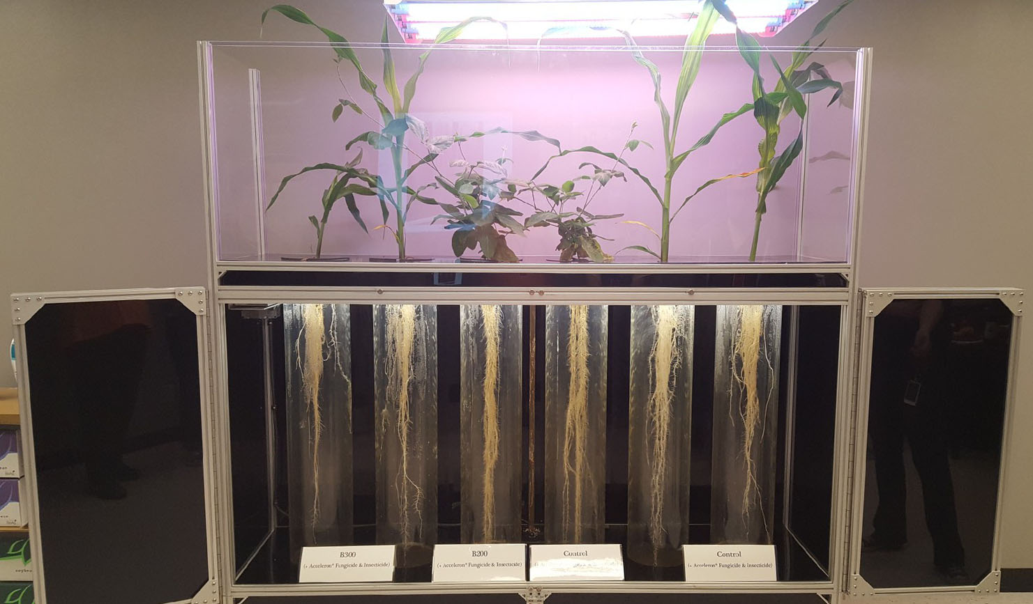 Plants at Monsanto used for testing different types of bug repellents.