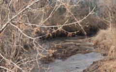 Report Released On Health Risks Related To Coldwater Creek