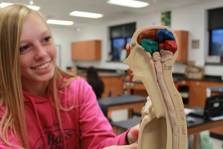 Junior Mandy O'Hearn and other HBS students fill in the half-skeleton with modeling clay, to help visualize the inner-workings of the human body.
