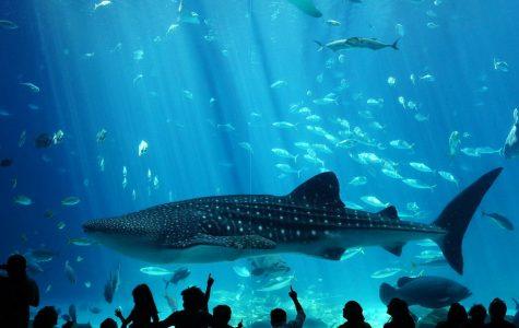 Georgia Aquarium, Georgia, USA