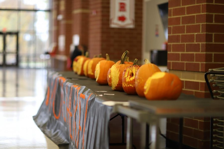 All the contestants' pumpkins lined up ready to be judged.