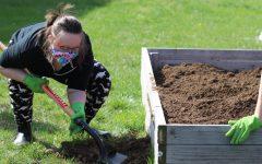 Junior Bella Tegtmeier scoops up soil into the garden bed.
