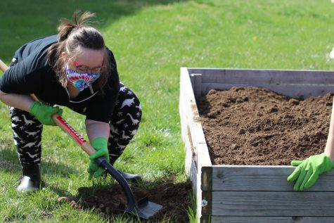 Junior Bella Tegtmeier scoops up soil into the garden bed.